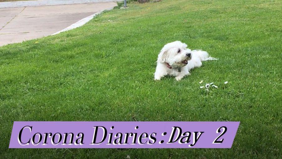 Corona Diaries | Day 2: Empty Parks